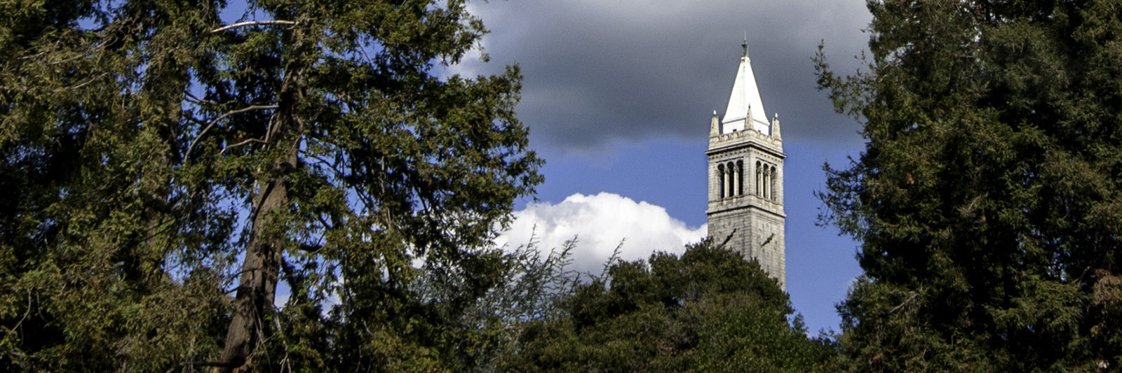 campanile banner image