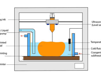 Capstone Project Profile: Precision Freezing 3D Bioprinter for Large Scale Tissue Engineering
